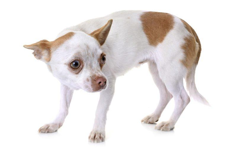 evitar la inseguridad en nuestros perros