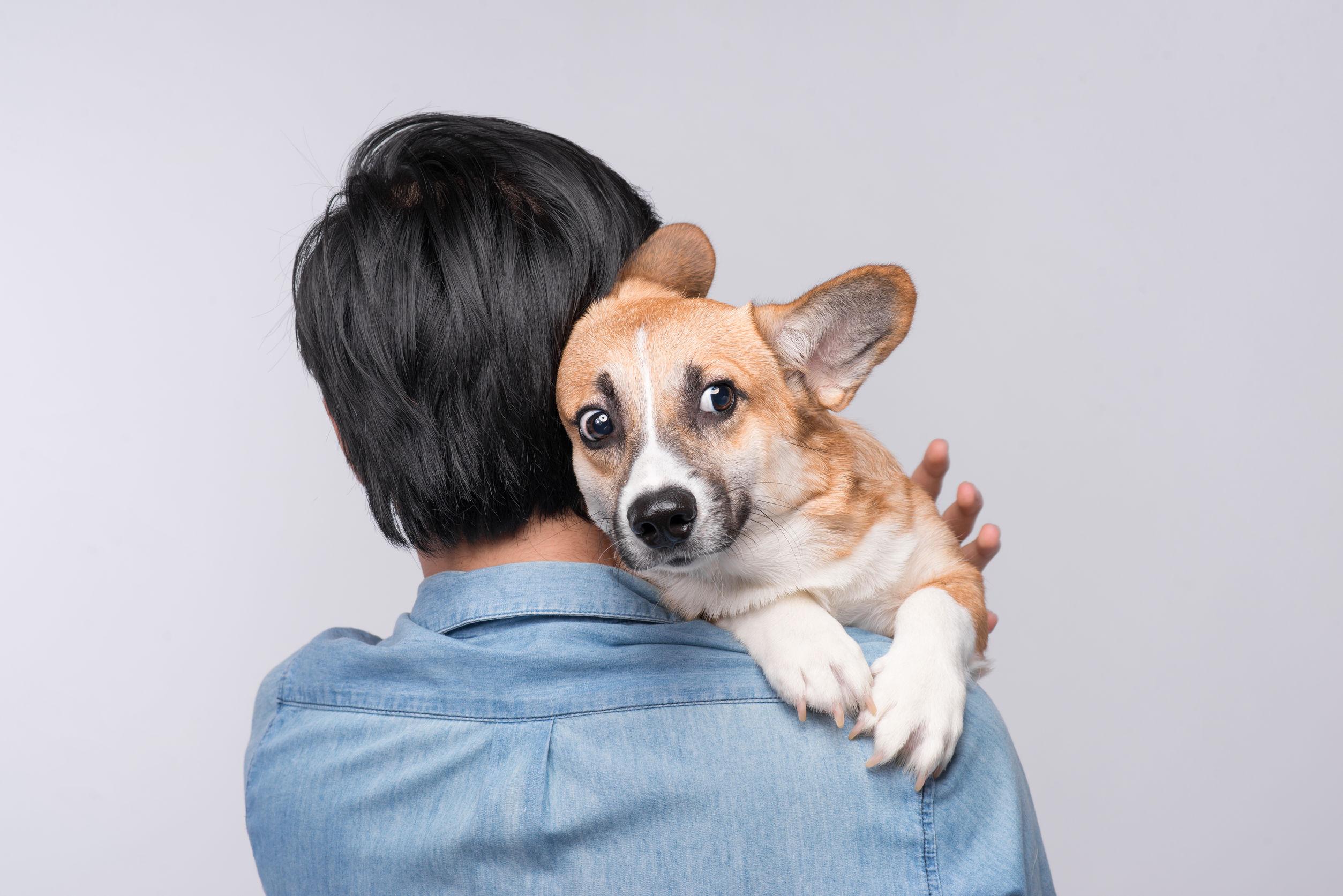 Cómo evitar la inseguridad en nuestros perros y sus problemas
