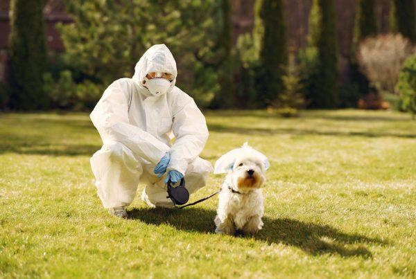 perro y virus